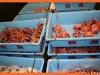 Токийский рыбный рынок-1