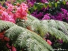 Бали.Красота-2